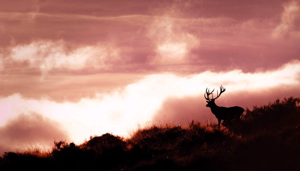 STAGS ABOVE THE CLOUDS